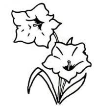 цветок Горечавка карандашом