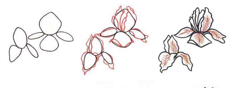 Рисуем цветок ирис - шаг 1