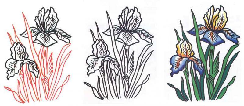 Рисуем цветок ирис - шаг 2