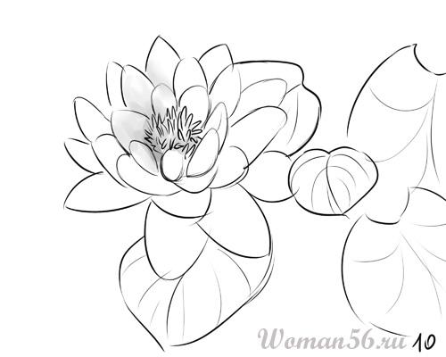 Рисуем цветок лотос - шаг 10
