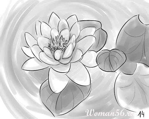 Рисуем цветок лотос - шаг 14