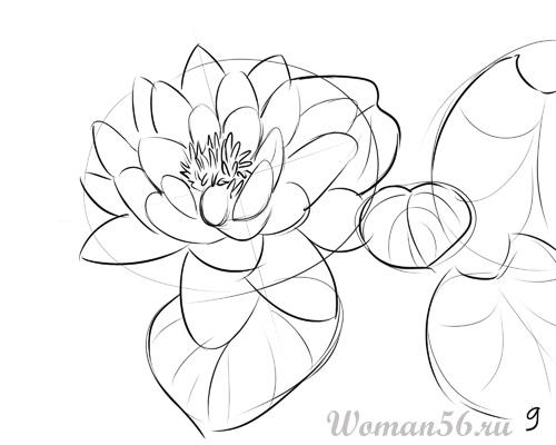 Рисуем цветок лотос - шаг 9