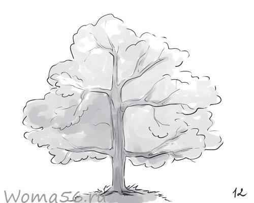 Рисуем лиственное дерево - шаг 12