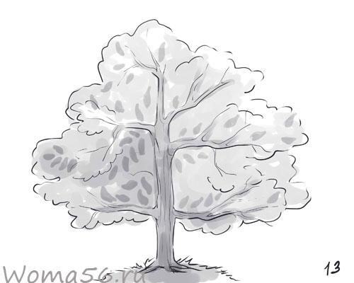 Рисуем лиственное дерево - шаг 13