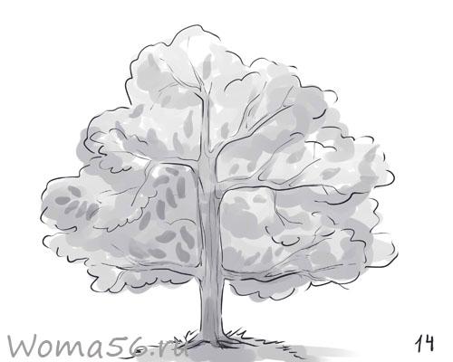Рисуем лиственное дерево - шаг 14