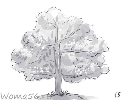 Рисуем лиственное дерево - шаг 15