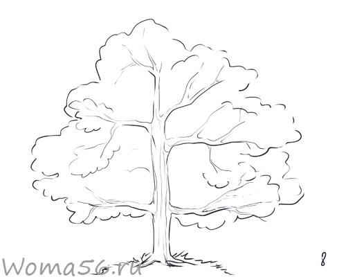 Рисуем лиственное дерево - шаг 8