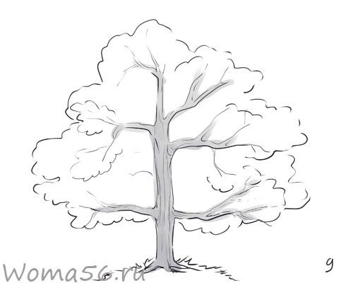 Рисуем лиственное дерево - шаг 9