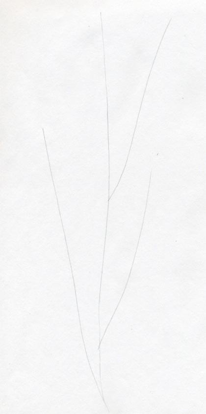 Рисуем гвоздику - шаг 1
