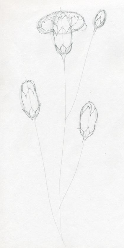 Рисуем гвоздику - шаг 3