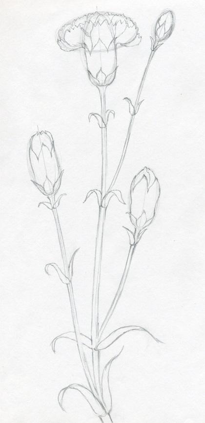 Рисуем гвоздику - шаг 4