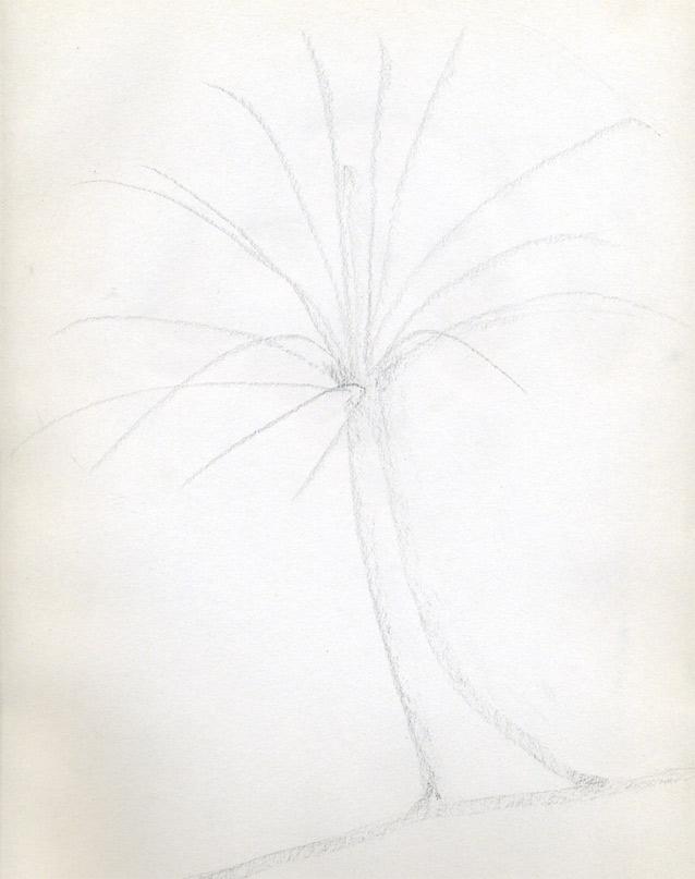 Рисуем кокосовую пальму - шаг 2