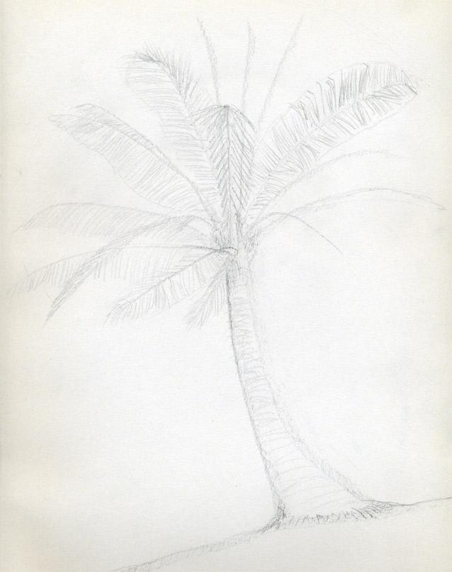 Рисуем кокосовую пальму - шаг 4