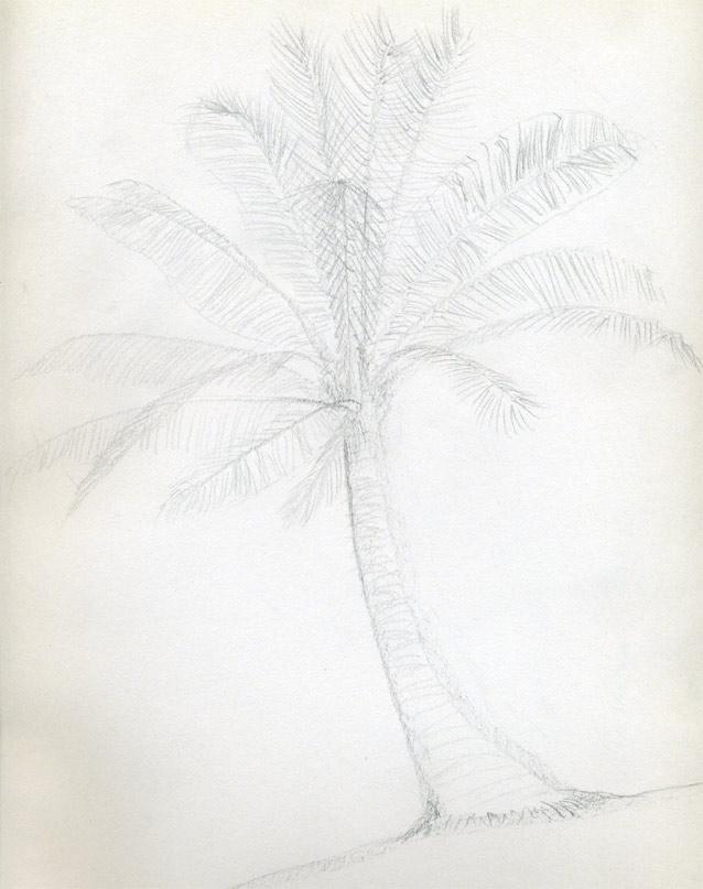 Рисуем кокосовую пальму - шаг 5