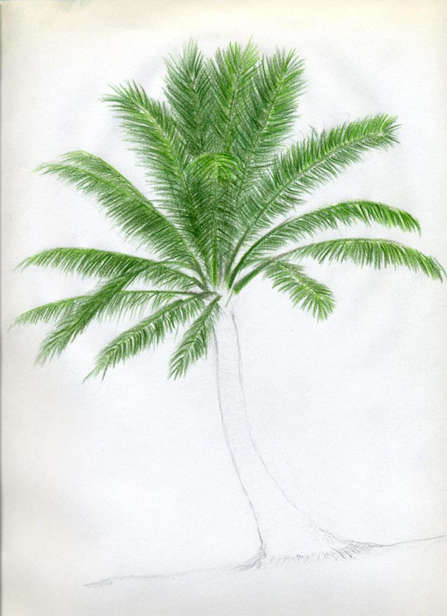 Рисуем кокосовую пальму - шаг 8