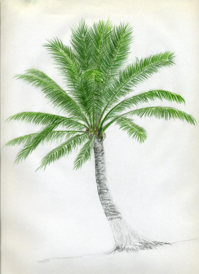 Рисуем кокосовую пальму - шаг 9
