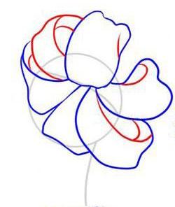 Рисуем лилию на бумаге - шаг 3