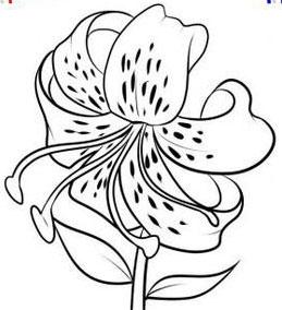 Рисуем лилию на бумаге - шаг 7