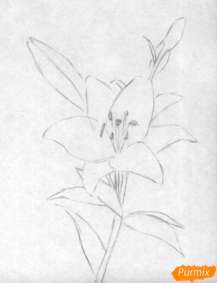 Рисуем лилию - шаг 1