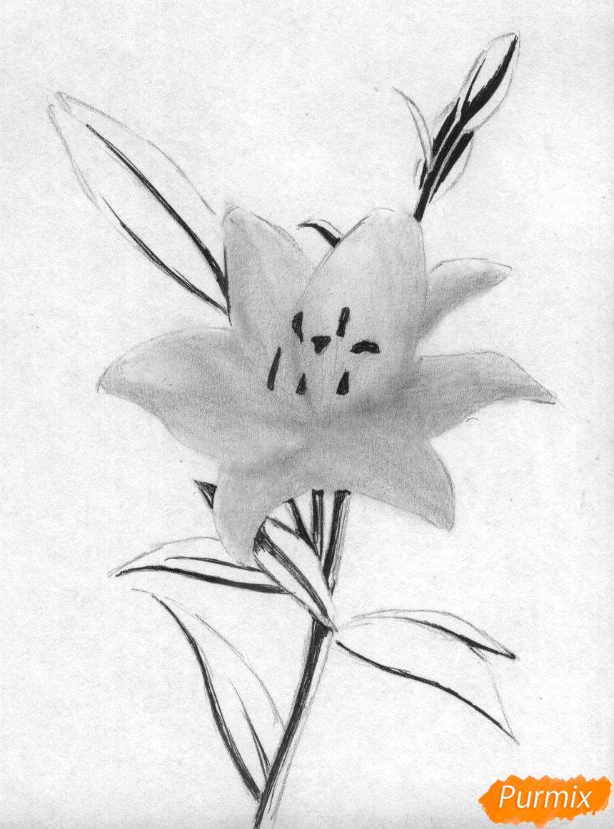 Рисуем лилию - шаг 2