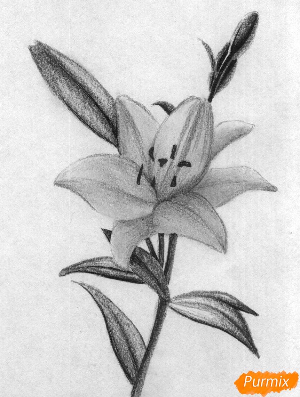 Рисуем лилию - шаг 3