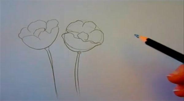 Рисуем маки - шаг 2
