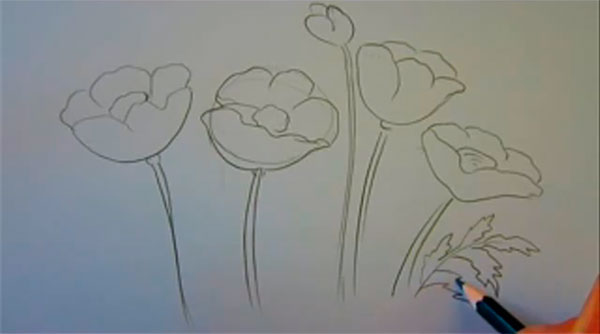 Рисуем маки - шаг 4