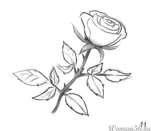 Рисуем розу   для начинающих - шаг 11