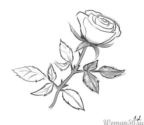 Рисуем розу   для начинающих - шаг 12
