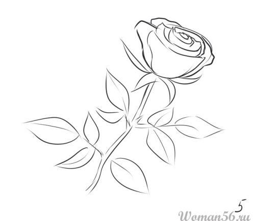 Рисуем розу   для начинающих - шаг 5