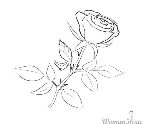 Рисуем розу   для начинающих - шаг 7
