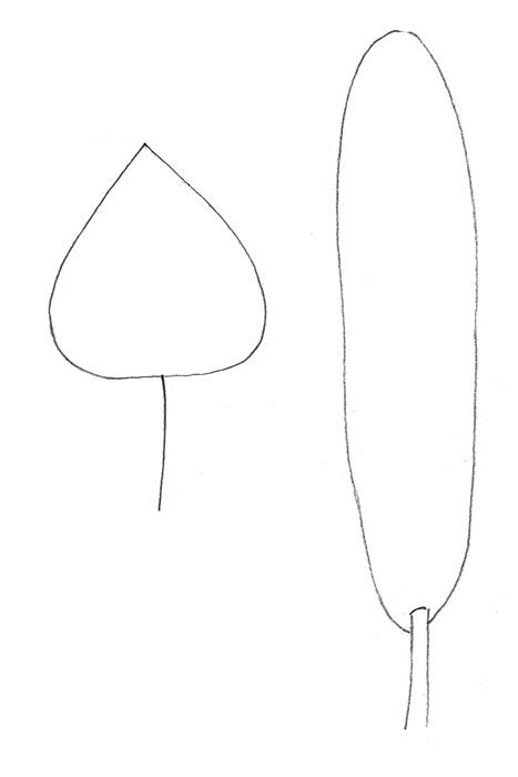 Учимся просто рисовать тополь - шаг 1