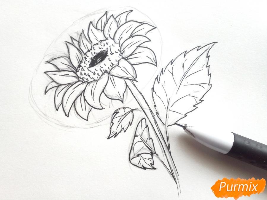 Рисуем подсолнух цветными карандашами - шаг 5