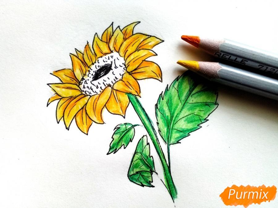 Рисуем подсолнух цветными карандашами - шаг 7