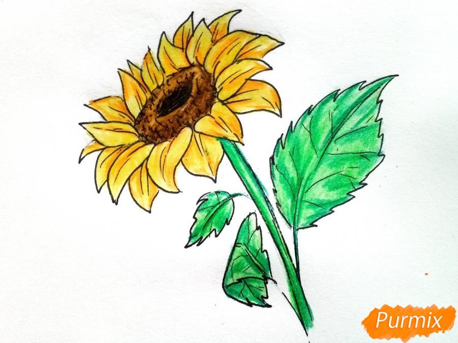 Рисуем подсолнух цветными карандашами - шаг 9