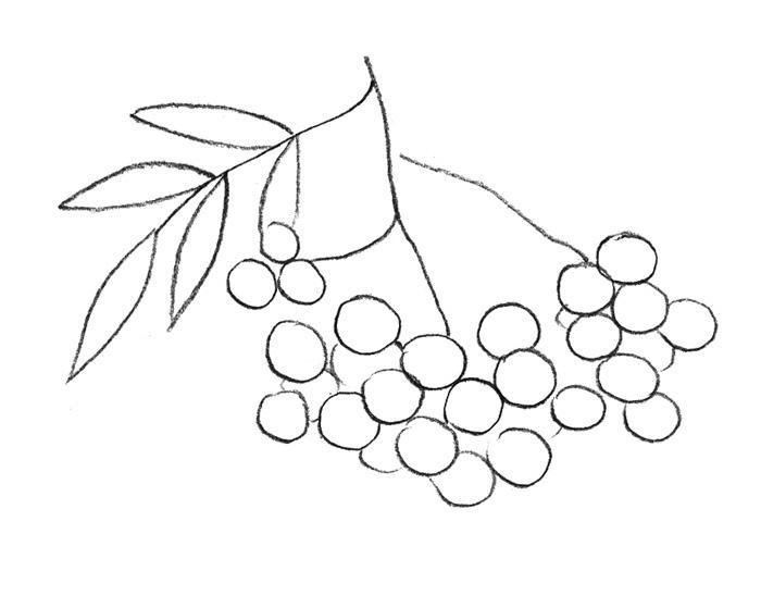 Рисуем рябину ребенку - шаг 2