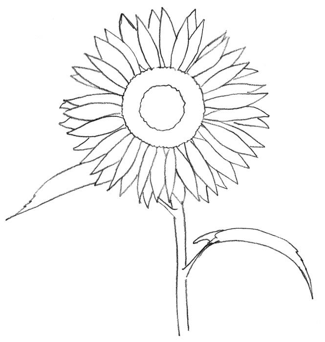 Учимся рисовать Подсолнух для детей - шаг 2
