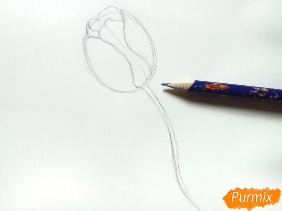 Учимся рисовать тюльпан ручкой - шаг 2