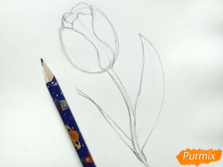 Учимся рисовать тюльпан ручкой - шаг 3