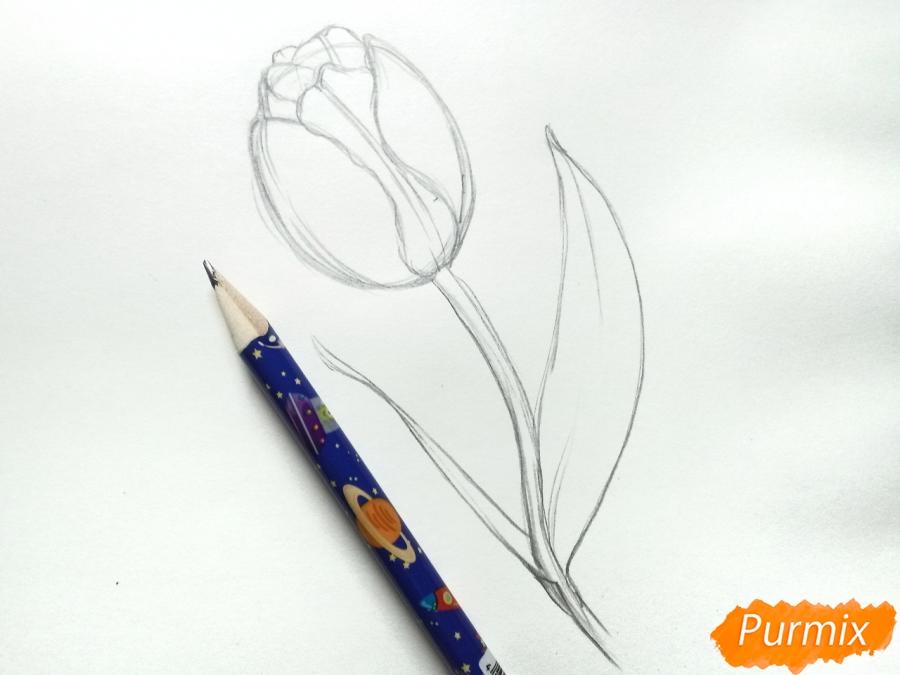 Учимся рисовать тюльпан ручкой - шаг 4