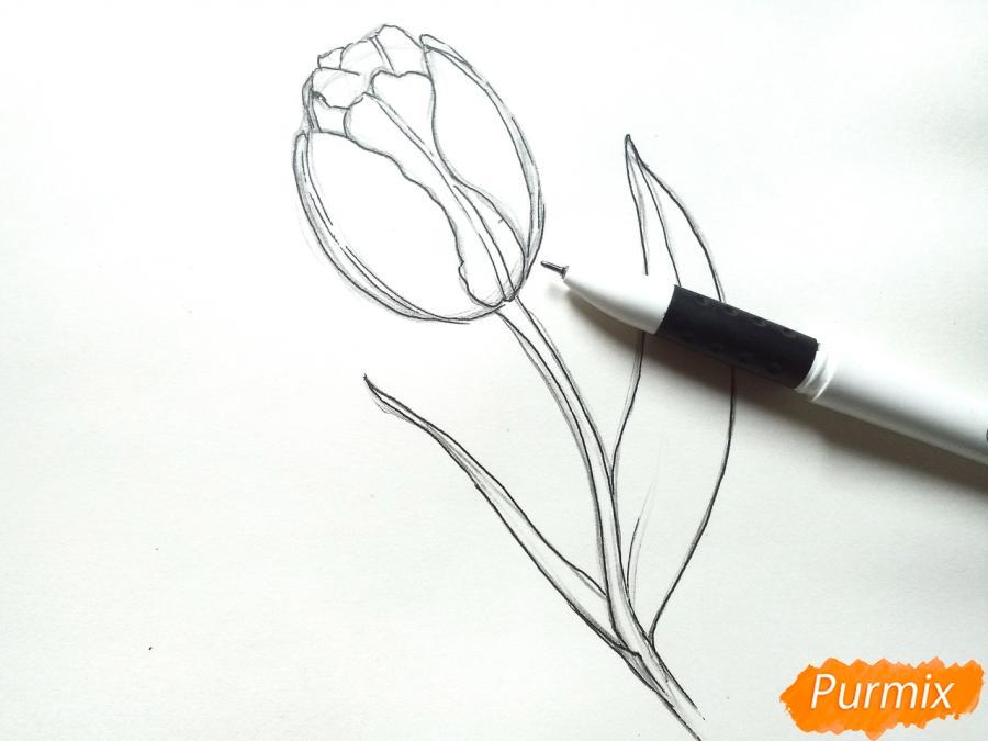 Учимся рисовать тюльпан ручкой - шаг 5