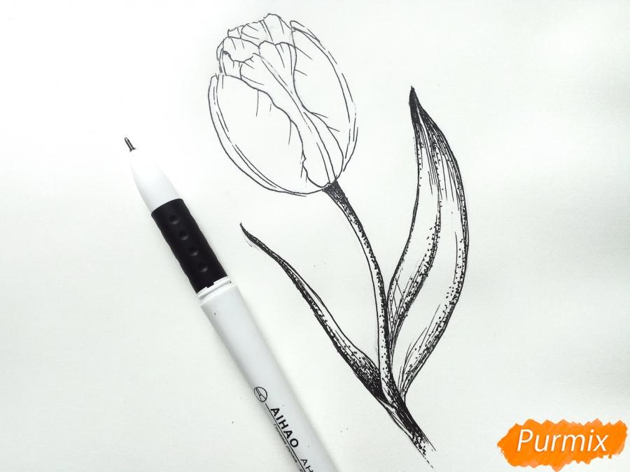 Учимся рисовать тюльпан ручкой - шаг 6