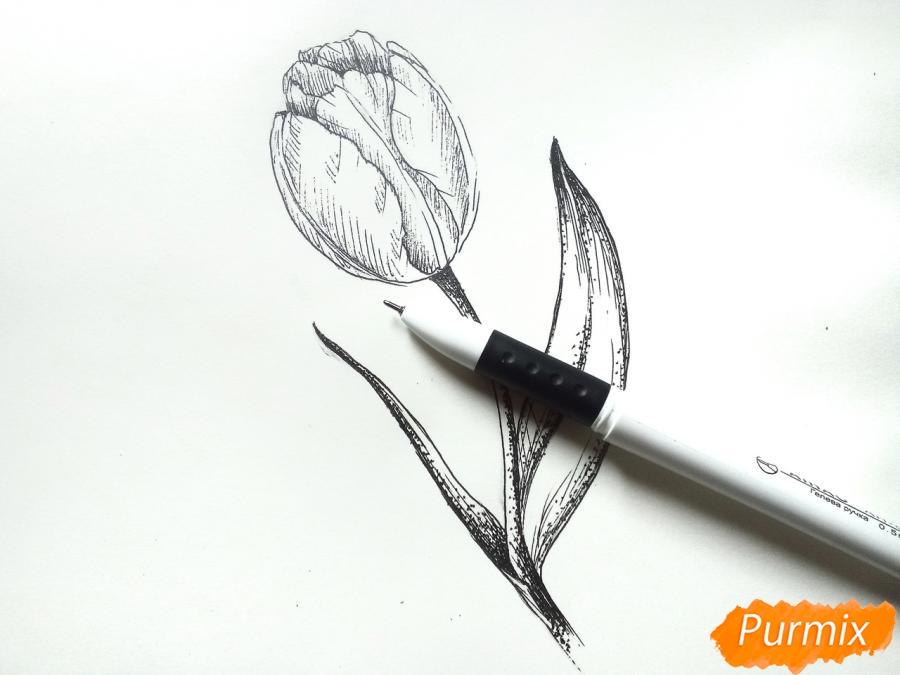 Учимся рисовать тюльпан ручкой - шаг 7