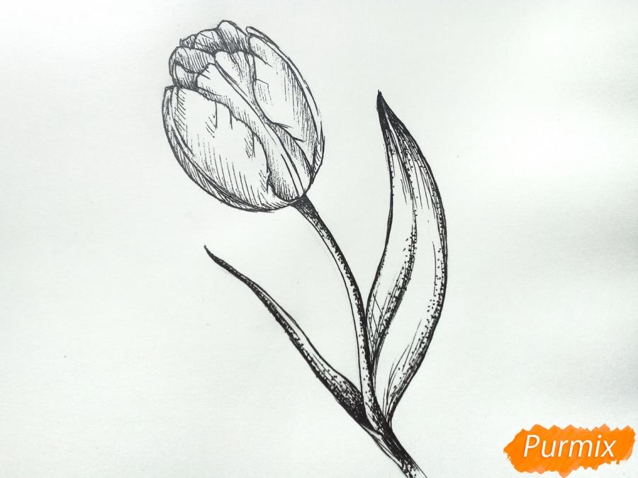Учимся рисовать тюльпан ручкой - шаг 9