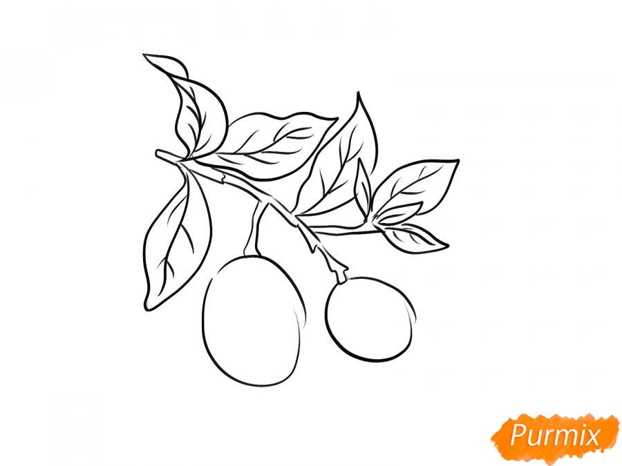 Рисуем авокадо на ветке - шаг 4
