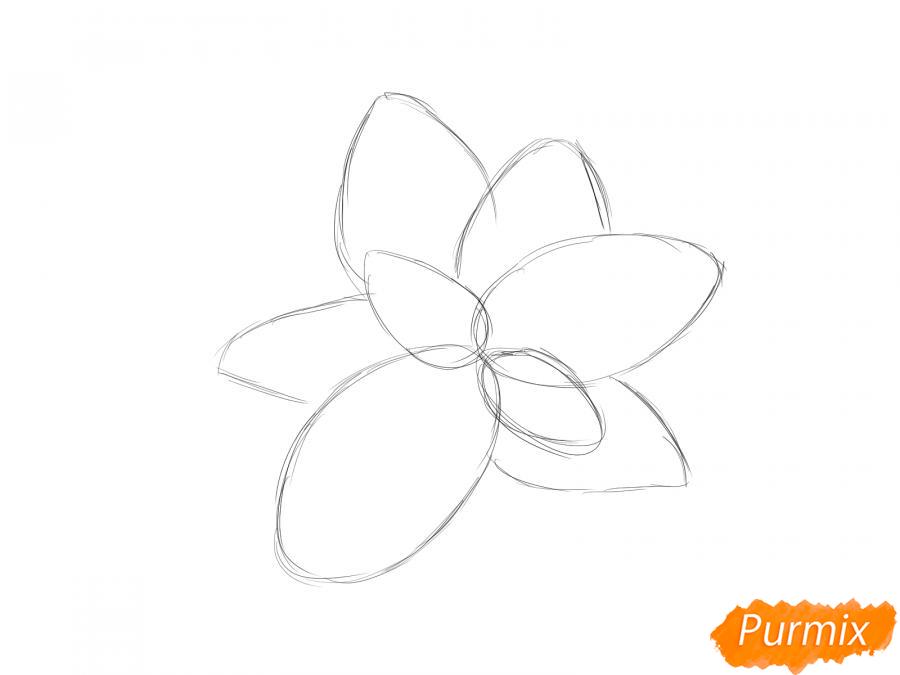 Рисуем базилик карандашами - шаг 2