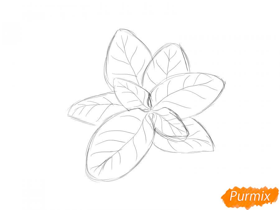 Рисуем базилик карандашами - шаг 3