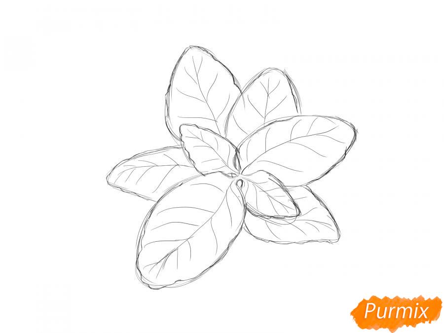 Рисуем базилик карандашами - шаг 4