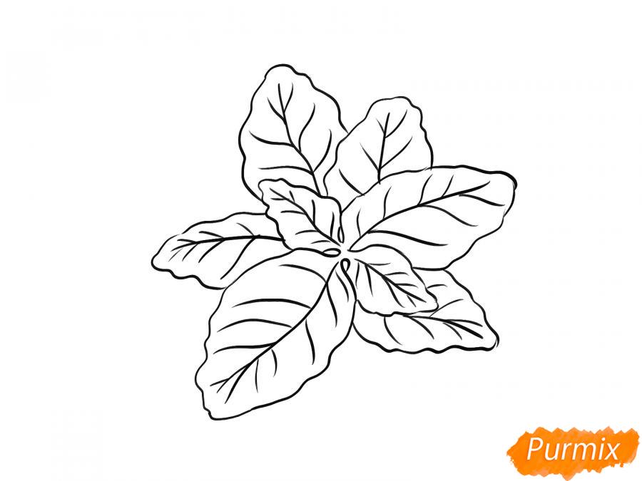 Рисуем базилик карандашами - шаг 5