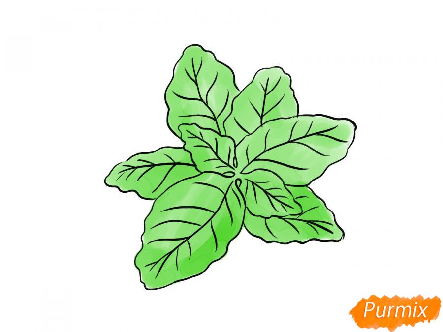 Рисуем базилик карандашами - шаг 6